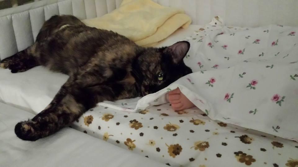 Piciorusul si pisica